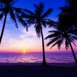 Sunset on the beach. Sunset over the tropical beach — Stock Photo #53066117