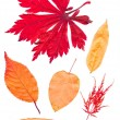 Colorful set of autumn leaves. collection beautiful colorful aut — Stock Photo #53246609