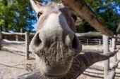 Friendly donkey.  head of a small donkey — Stock Photo