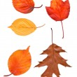 Colorful set of autumn leaves. collection beautiful colorful aut — Stock Photo #53790263
