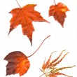Colorful set of autumn leaves. collection beautiful colorful aut — Stock Photo #53790277