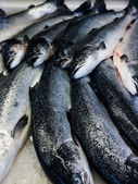 Fresh fishes in a market. seafood in market closeup background — Stock Photo