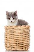 British kitten  in  box.  cute kitten on white background  — Stock Photo