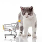 British cat with shopping cart — Stock Photo