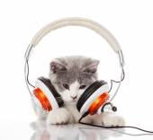 Cute kitten and headphones.  Young cat is listening to music wit — Stockfoto