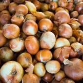 Fresh onion. Ripe onions as background.  — Stock Photo