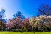Spring nature background.  Spring landscape — Foto Stock