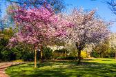 Spring nature background.  Spring landscape — Stockfoto