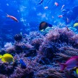 Tropical fish in blue coral reef — Stock Photo #55710461