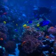 Tropical fish in blue coral reef — Stock Photo #55710473