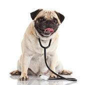 Hund med stetoskop. — Stockfoto