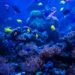 Tropical fish in blue coral reef sea — Stock Photo #56075681