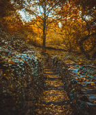 Climbing trail with stone steps — Foto Stock