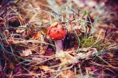 Poisonous toadstool mushroom — Stock Photo