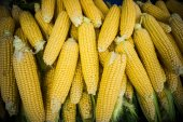 Ripe corn in market — Stock Photo