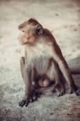 Cute Monkey portrait — Stock Photo
