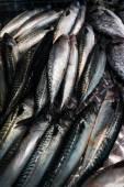 Mackerel  for sale at  fish market. — Stock Photo