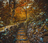 Climbing trail with stone steps — Stock Photo