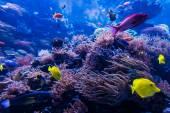 青い珊瑚礁の熱帯魚 — ストック写真
