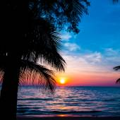 Sunset over palm trees — Stock Photo