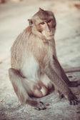 Monkey sitting on ground — Stock Photo