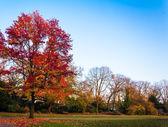 美丽的秋天森林 — 图库照片