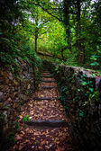 Stairs in forest. — Stock Photo