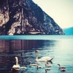 Swan family in lake — Stock Photo #58728789