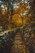 Climbing trail with stone steps — Foto de Stock