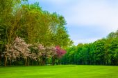 Lawn in park — Stock Photo