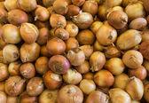 Unshelled fresh onions — Stock Photo