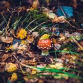Poisonous toadstool mushroom — Стоковое фото