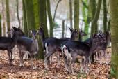 Deer family. — Stock Photo