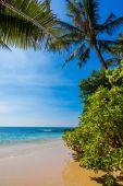 Tropical paradise. — Stock Photo
