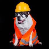 Dog under construction. — Stock Photo