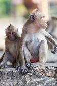 Monkey  family in zoo — Stock Photo