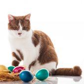 Kotě s velikonoční vajíčka — Stock fotografie