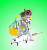 Rat with shopping cart — Stock Photo