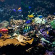Tropical fishes meet in coral reef — Stock Photo #71989661