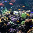 Tropical fishes meet in coral reef — Stock Photo #71989667
