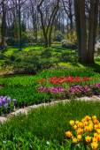 Beautiful garden in The Spring — Stock Photo