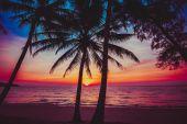 Palm trees silhouettes — Stock Photo