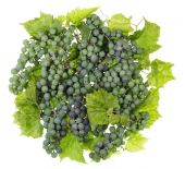 Green sweet grapes ball — Foto Stock