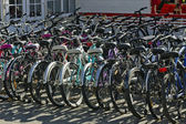 Lease of bicycles in city park — Stock Photo