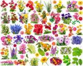 Floral design elements — Stock Photo