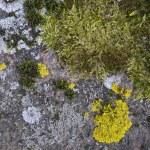 Seasons on a granite stone — Stock Photo #73280753