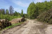 Ruthless deforestation — Stock Photo