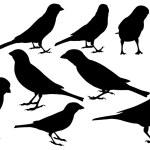 Sparrows — Stock Vector #63310771