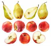 Watercolor painting of apples and pears — Stock Photo