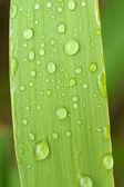 Regen dops op gras blade — Stockfoto